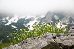 Montenegro [10]: National Park Durmitor (Christina Karchevskaya) Tags: trip travel mountains hiking balkans montenegro