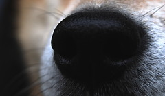 nose (Stewartomo-14) Tags: dog nose photo olympus photograph