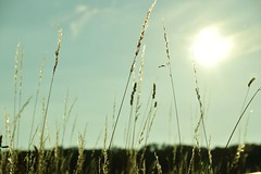 Sommer (Lilith-Luana) Tags: sommer wiese gras sonne
