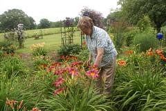 Blooming Daylilies (grandpaspix) Tags: garden lens iowa dt daylilies sonya100 35561870mm