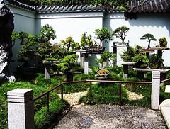 Penpen (justbeingdust) Tags: garden friendship chinese sydney australia penjing akawhatjapanesemadeintobonsai