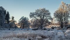 161230_006-90.jpg (Jacky Vastmans) Tags: limburg maasmechelen mechelseheide beriezen bevroren bos cold freezing frozen koud landscape landschap panorama sneeuw sneeuwlandschap snow snowy stilleven vriezen winter winterlandschap wood