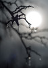 Icy crabapple branch bokeh (DannyBurkPhotography) Tags: bokeh sun winter ice freezingrain crabapple twigs southbend indiana