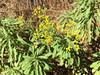 Yello weeds (Entangled Photons) Tags: cabo cape kap verde santo antao