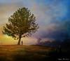 The Loner... (rubyblossom.) Tags: mii challenge 3 tree man stand alone sunset distance landscape rubyblossom rubystreasures 2017