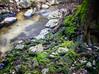 La brague (epigout06) Tags: iptcsubjects racine ressourcesnaturelles photoculinaire rivières iptcnewscodes root green accompagnementsgarnituresetsauces vert condiments piments environnement nature 06000000 06006000 06006006 06007000 nourriture photodecuisine environmentalissue naturalresources rivers
