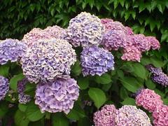 Mona Vale (benhosg) Tags: newzealand southisland monavale flower
