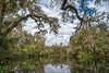The Dead River (tfhammar) Tags: deadriver park wild hillsborough river tampa florida