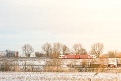 Snow Train (Alisonfd) Tags: snow snowy train trains nstrain netherlands landscape landscapephotography trainphotography travel travelphotography trees dutch dutchtrain nederlandtrein nature tamron tamron2470mm 2470mm snows snowylandscape women photographer womenphotography femalephotographer nikon photo nikonphotographer netherlandslandscape