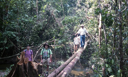 Bill ranversing a tree bridge over a small river