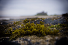 Bamburgh Low Tide... (Moonbags) Tags: england castle beach tide low shoreline northumberland lowtide bamburgh