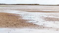 Soldier crabs marching on the beach (sandergroffen) Tags: animals australia places georgetown tasmania dieren australie australië tasmanie lowhead soldiercrabs mictyris longicarpus mictyrislongicarpus