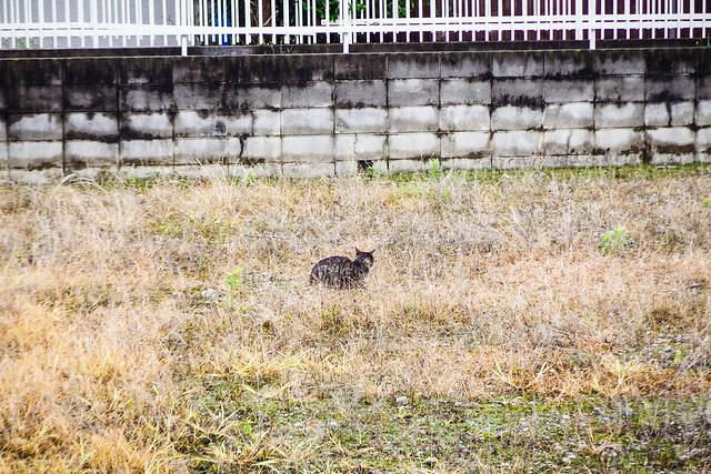 Today's Cat@2015-07-08