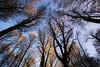 La Faggeta - Soriano nel Cimino ( Vt ) (ISO.MANIA) Tags: alberi viterbo lazio faggeta monticimini
