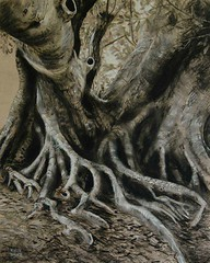 WT3 (Robyn Bauer) Tags: trees blackandwhite art drawing australia brisbane charcoal queensland figtree charcoaldrawings treedrawings