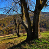 alberi (joestammer) Tags: italia italy alpi alps vallidilanzo valdiviù explore