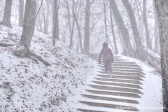 Winter ... a step at a time (Ken Scott) Tags: empireblufftrail stairs snow blizzard rl leelanau michigan usa 2016 december fall autumn 45thparallel fhdr kenscott kenscottphotography kenscottphotographycom freshwater greatlakes lakemichigan sbdnl sleepingbeardunenationallakeshore voted mostbeautifulplaceinamerica