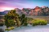Red Rock Overlook (Joel Quimpo) Tags: red rock dawn junipertree las vegas