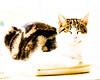 Cassie eyes closed (PDKImages) Tags: cat black ragdoll monochrome pet animal feline blackcat asleep eyes calming