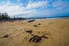 DSC00080 (Damir Govorcin Photography) Tags: seaweed sand surf water ocean sea manly beach sydney natural light people trees composition creative perspective zeiss 1635mm sony a7rii clouds sky landscape