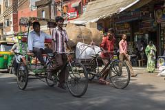 Delhi, India (Ann Kruetzkamp) Tags: india rajasthan intrepid travel tours cycling bicycling new delhi mosque hindu photojournalism photo photography people men women sari scarf textiles fabric color chai alley cart vegetable market fruit stand store stall dawali 2016 chandni chowk chandnichowk rickshaw cyclerickshaw cycle driver rickshawdriver bike
