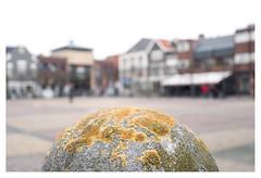 Market square, Naaldwijk (leo.roos) Tags: wilhelminaplein lichen korstsmos naaldwijk westland mir1b3728 russianlens sovietglass a7rii dayprime day37 dayprime2017 dyxum challenge prime primes lens lenzen brandpuntsafstand focallength fl darosa leoroos