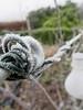 HMM - Frosty Corner (Feathering the Nest) Tags: hmm macro monday frosty corner wire fence winter garden macromonday solarlight lightbulb frost ice