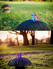 Happiness is time spent with a friend... (twinnieE) Tags: pink friends two couple blue truecolours2017 cute outdoors toadstool diptych toys