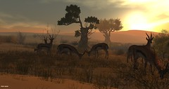 Devin2 - Antelopes (AtlanBade) Tags: wildlife devin2 elephant zebra afrika