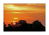 Sunset Over Thorrington (paulinecurrey) Tags: sunset clouds sun parachutejumper oranges yellows burntumber paleblue trees woodland foliage colour colourful color colorful canon digital serene calming peaceful nighttime thorrington england essex neartheseaside treetops parachute man nature silhouette goldencolours colours