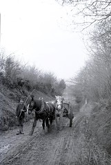 H00585 Wagon and horses c.1890 (East Sussex Libraries Historical Photos) Tags: horses wagon costume track library country victorian farmer hastings cart 1890 glassplatenegative georgewoodscollection