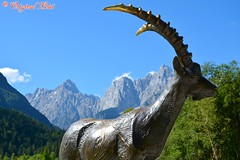 DSC_7195 (Original Loisi) Tags: panorama lake mountains alps nature landscape see view natur berge slovenia slovenija slowenien alpen gebirge steinbock kranjskagora julischealpen karawanken republikaslovenija kronau