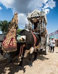 AE5D0737 (alonsoesparterofoto) Tags: caballo alma imagenes alonso rocio ermita bombo flamenca buey flauta gitana romeria campero botos tamboril bueyes rociero carriola simpecado tamborilero espartero rociera gibraleon sinpecado alonsoespartero