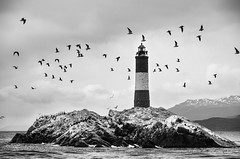 Les Eclaireurs Lighthouse (Aka The Lighthouse At The End Of The World) (amrocha) Tags: 2015 argentina ushuaia ferias frio inverno trilha vacation viagem pentax pentaxk5ii patagonia bw lighthouse farol birds landscape ilha island sea seascape theendoftheworld leseclaireurs leseclaireurslighthouse thelighthouseattheendoftheworld julesverne julioverne tierradelfuego terradofogo southamerica south america tierra fuego terra fogo beaglechannel canaldebeagle canal beagle channel blackandwhite pretoebranco pb noiretblanc pentaxart ngc pharo pharos americadelsur amricadosul amriquedusud amrica sudamerika patagonie travelphotography travel trip pentaxflickraward vacaciones ferien isla 18135 18135mm da18135mm pentaxda smcpentaxda18135mmwr southhemisphere sul sur sud