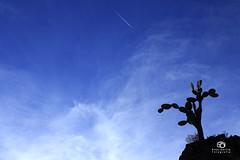 Nopal (Kios Photography) Tags: naturaleza nature oaxaca sierrajuarez fotografo ecoturismo sierranorte ixtlan ixtlandejuarez ecoturixtlan kiosgarcia kiosphotography