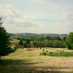 """cows in the meadow #belgium #belgie <a style=""""margin-left:10px; font-size:0.8em;"""" href=""""http://www.flickr.com/photos/117161355@N07/19750806710/"""" target=""""_blank"""">@flickr</a>"""
