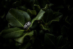 Wedding Band (Robbybeggs) Tags: wedding plants men green up leaves closeup 35mm silver iso100 is engagement close shot band picture rob ring diamond burn mens dodge f2 tungsten usm 20 bridal beggs lightroom f20 robsoundtrack