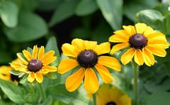DSC_9791 (haot) Tags: plant flower macro nikon outdoor farm lexington july wilson tamron 2015 d610 90mmm