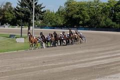 Die  Sdkurve (Sockenhummel) Tags: horses fuji fujifilm pferde pferd rennen x30 horserace finpix 2015 pferderennen trabrennbahn rennbahn mariendorf trabrennbahnmariendorf traberderby fujix30