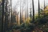 A Fresh Start (desomnis) Tags: forest woods woodland deciduouswood wood nature naturephotography canon6d 6d tamronsp2470mmf28 tamron2470mm desomnis trees fog mist misty foggy haze nebula mystic mystical natur oberösterreich upperaustria austria österreich mühlviertel