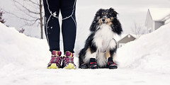 Running with my buddy (lapointegenevieve60) Tags: selfie sport running training cold outside snow dog sheltie colors paws foot legs shoes boots black white