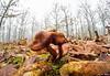 camuflaje macro wide angle (gatomotero) Tags: olympusomdem1 widemacroangle fieldmacrowideangle bosque angular panoramas setas fungi otoño