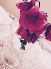 Flowers 🌺 #santarita #flowers #aussieflorwers #australia #inlove (Jazmin Lopez Ali) Tags: santarita flowers aussieflorwers australia inlove