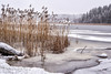 DSC_5001-Edit.jpg (marius.vochin) Tags: water hiking reeds outdoor cold winter snow waterfront vaxholm stockholmslän sweden se