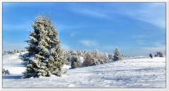 Winter in der Heide (Don111 Spangemacher) Tags: heide heidekreis himmel niedersachsen naturschutzgebiet naturpark niederhaverbeck natur schnee reisen romantik landschaft lüneburgerheide bispingen winter wolken