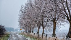 Ice Trees (BraCom (Bram)) Tags: bracom winter ice ijs tree boom fence hek cottage huisje road dike dijk weg sign bord wet nat cold freezing vriezen reed riet grass fog mist dirksland goereeoverflakkee zuidholland nederland southholland netherlands holland canoneos5dmkiii widescreen canon 169 canonef24105mm bramvanbroekhoven nl