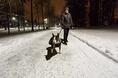 Winter walk (Tenho Mikkolainen Personal) Tags: helsinki finland bullterrier bully miniaturebullterrier minibull martti winter snow canon 5dmk3 withcanonyoucan