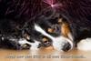 Happy new year 2017 (roland_lehnhardt) Tags: happynewyear2017 gutenrutsch glücklichesneuesjahr canon eos60d ef50mmf18ii silvester card glückwunschkarte hunde dog tierportrait animals pet 2017 germany