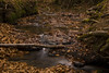 ARROYO EN EL HAYEDO DE OTZARRETA (Luis Sanz Díez) Tags: otzarreta hayedo gorbea parquenatural vizcaya bizcaia paisvasco esukadi paysbasque basquecountry hojas hayas otoño arroyo agua verde green ocre brown field