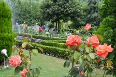 DSC_7579 (rushmurad) Tags: kahmir india dal lake kashmiri